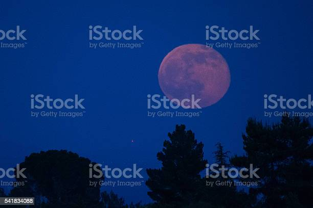 Photo of Strawberry Moon and Pine Trees