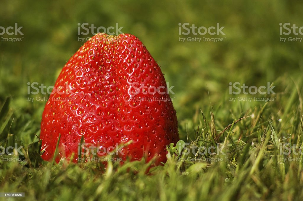 Strawberry on the lawn stock photo