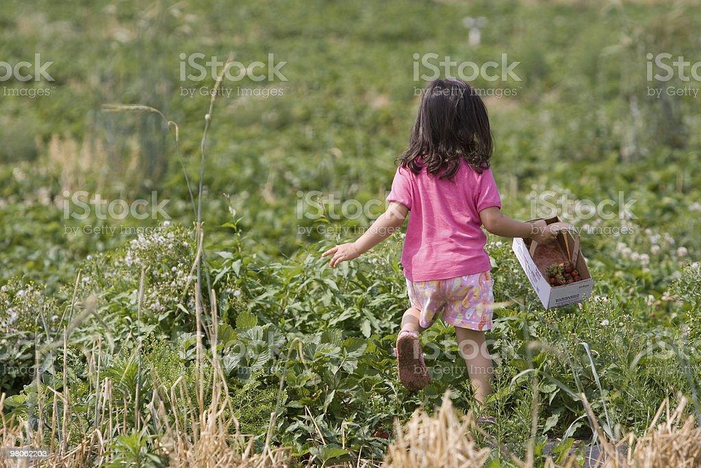 Strawberry Picker royalty-free stock photo