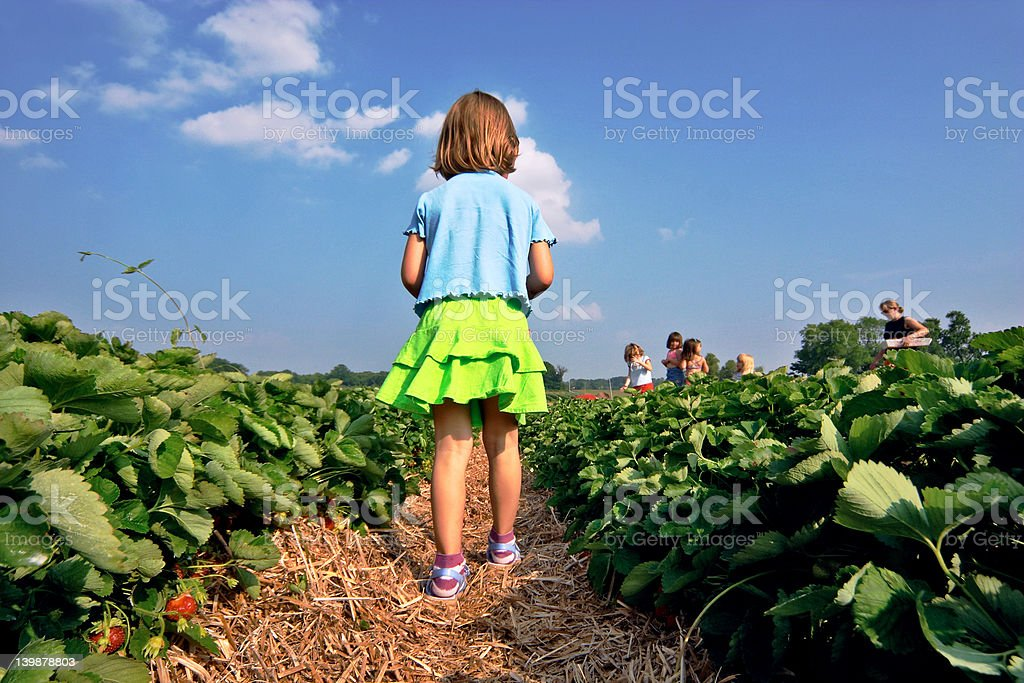 Strawberry time royalty-free stock photo