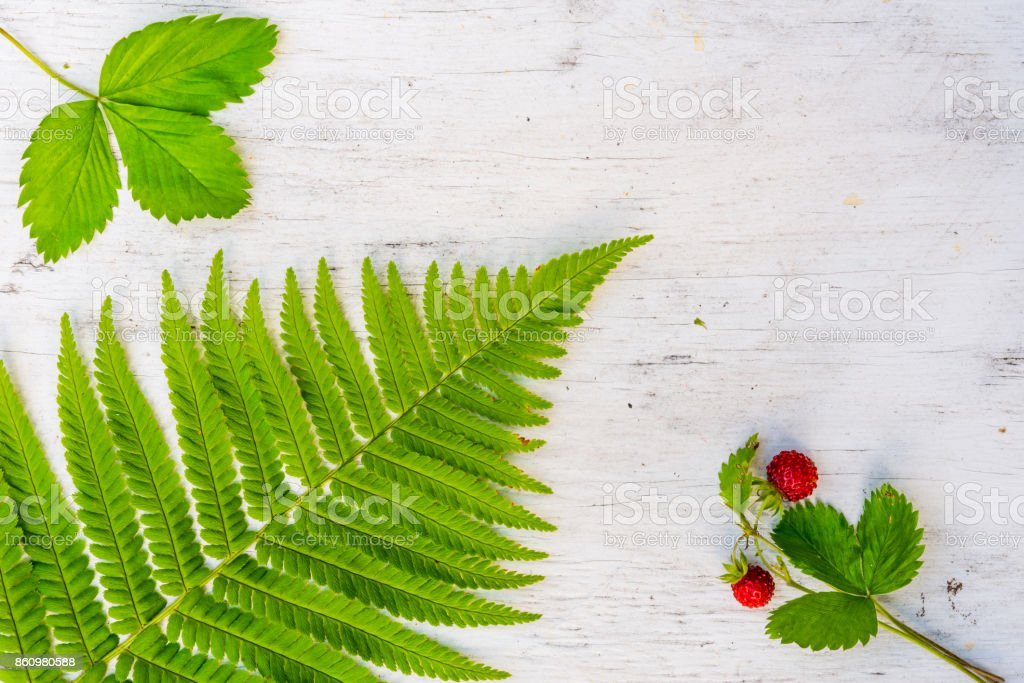 Strawberry with ferns stock photo