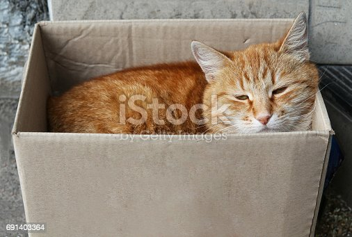 istock stray alley red cat sleeping in paper box 691403364