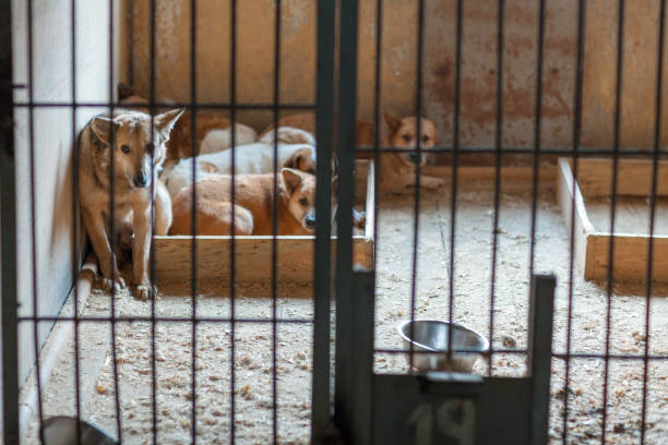 streunende tiere in einem käfig - hunde aus dem tierheim stock-fotos und bilder