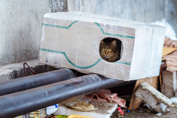 stray animals in winter, homeless cat sitting on a heating main, homeless frozen cat warms on pipes, people making a house out of a box for a homeless cat, warm house out of a box for a homeless cat - desperdício alimentar imagens e fotografias de stock