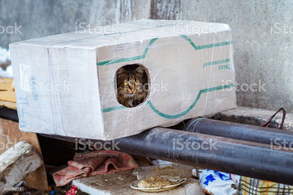stray animals in winter, homeless cat sitting on a heating main, homeless frozen cat warms on pipes, people making a house out of a box for a homeless cat, warm house out of a box for a homeless cat stock photo