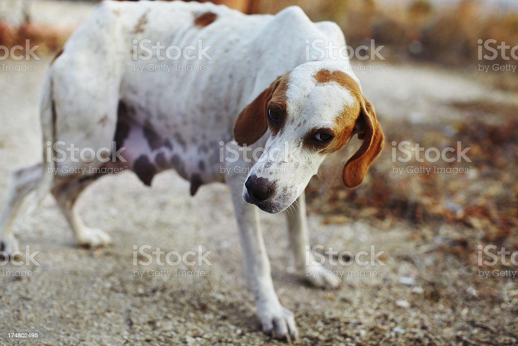 Stray animals stock photo