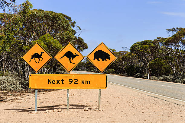 sa stray animals sign 92 km - wombat stock photos and pictures