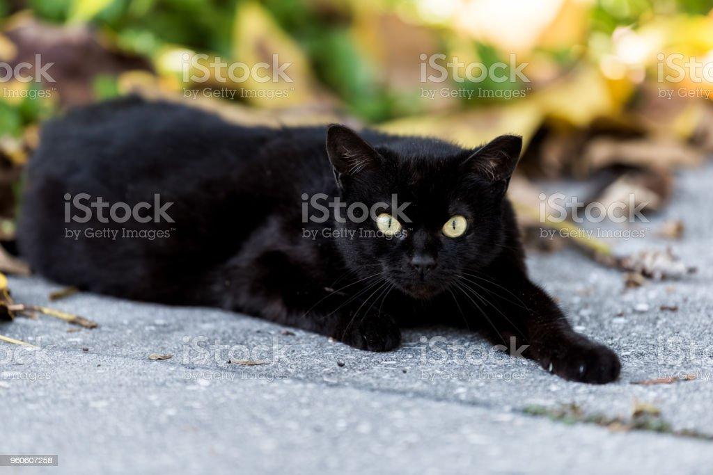 Stray Black Cat With Piercing Green Eyes Sitting On Sidewalk