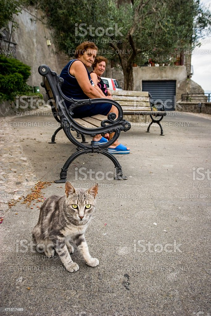 Stray cat and old ladies royalty-free stock photo