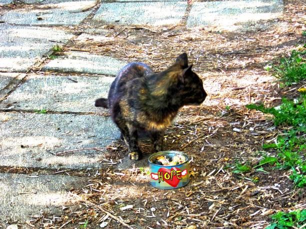Stray cat eating tuna fish picture id668506902?b=1&k=6&m=668506902&s=612x612&w=0&h=hhdlur5om4mwxno1 z0ywzukdknenqdbmkumfsxkini=