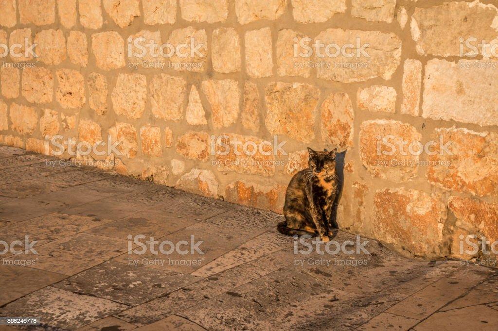 Stray cat in Dubrovnik stock photo