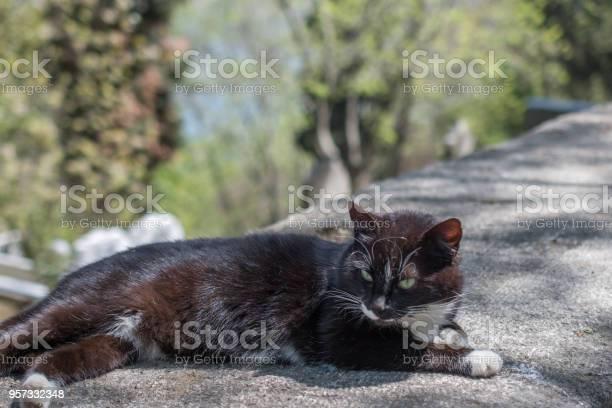 Stray cat in the street picture id957332348?b=1&k=6&m=957332348&s=612x612&h=w2b9pb q1n14migcxezqy0cfvs5rgrsqjr2mydjt2ow=