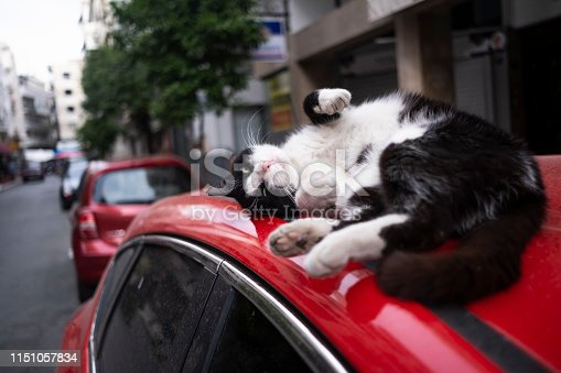 Stray cat napping on a Car