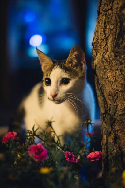 Stray cat night portrait