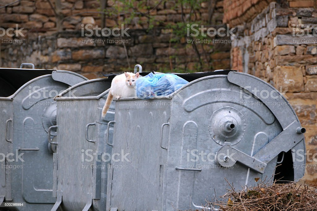 Stray Cat on the Garbage Container stock photo
