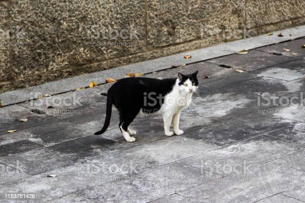 Stray cat on the street in busan korea picture id1153751426?b=1&k=6&m=1153751426&s=612x612&h=wwlcsnhggdmxrgadsqm1mxk0uwg4 wedutxtrpm5mtg=