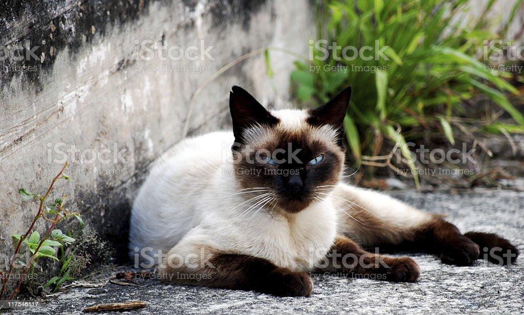 Stray Cat stock photo
