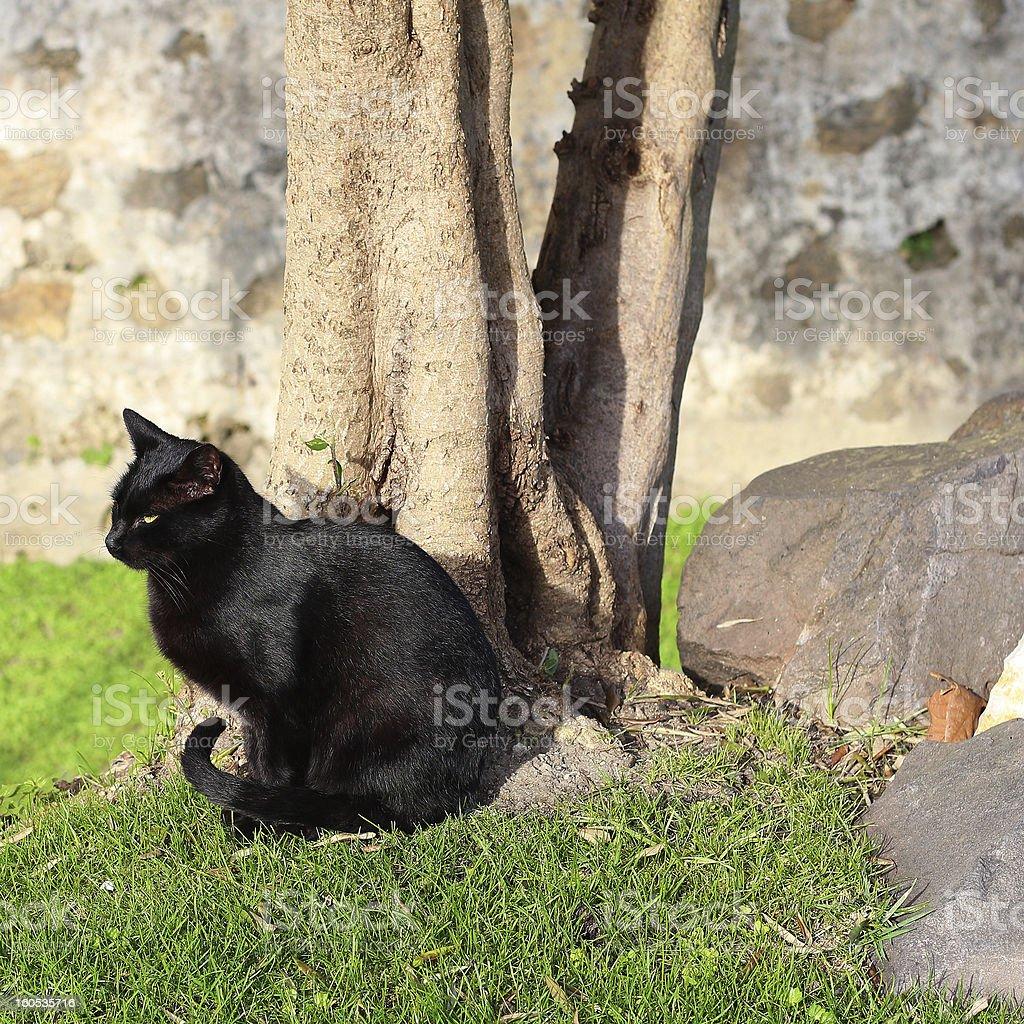Stray cat royalty-free stock photo