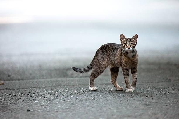 Stray cat picture id177850160?b=1&k=6&m=177850160&s=612x612&w=0&h=b8q7b69c3d0aaovivyzsk ljzbupatvgnaiefuf3lju=