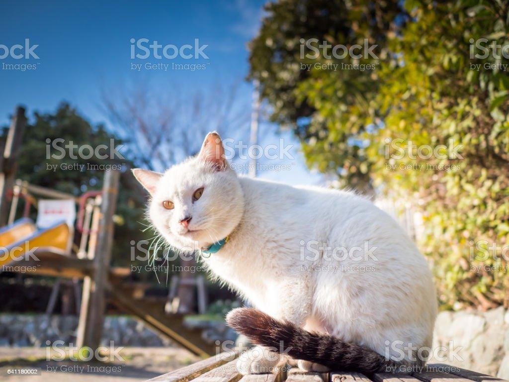 Stray cat stock photo