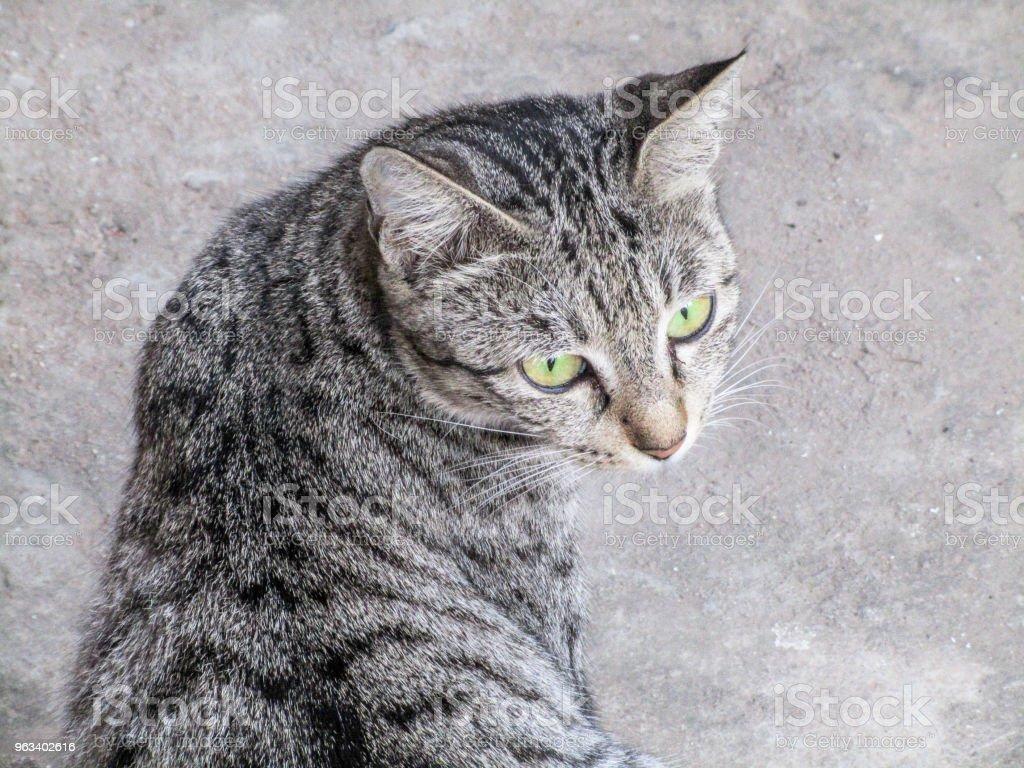 Herrelös katt - Royaltyfri Bortsprunget djur Bildbanksbilder