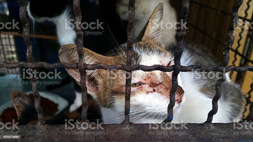 stray cat , poor cat zbiór zdjęć royalty-free