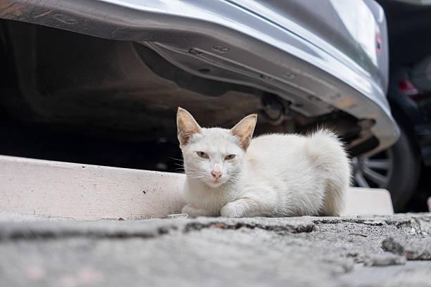 Stray cat sitting behind car picture id481675058?b=1&k=6&m=481675058&s=612x612&w=0&h=gh g h elbdkrvuwe1gy5uly yyj9f37ryiojtjmh50=
