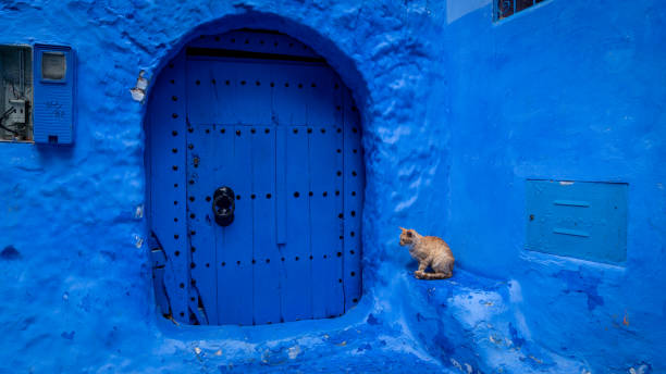 Stray cat spending time at the streets of chefchaouen morocco picture id1009518678?b=1&k=6&m=1009518678&s=612x612&w=0&h=knkxb2fofcqw9kxfyd5wcjekx1qm2wz8nxx2v4euor4=