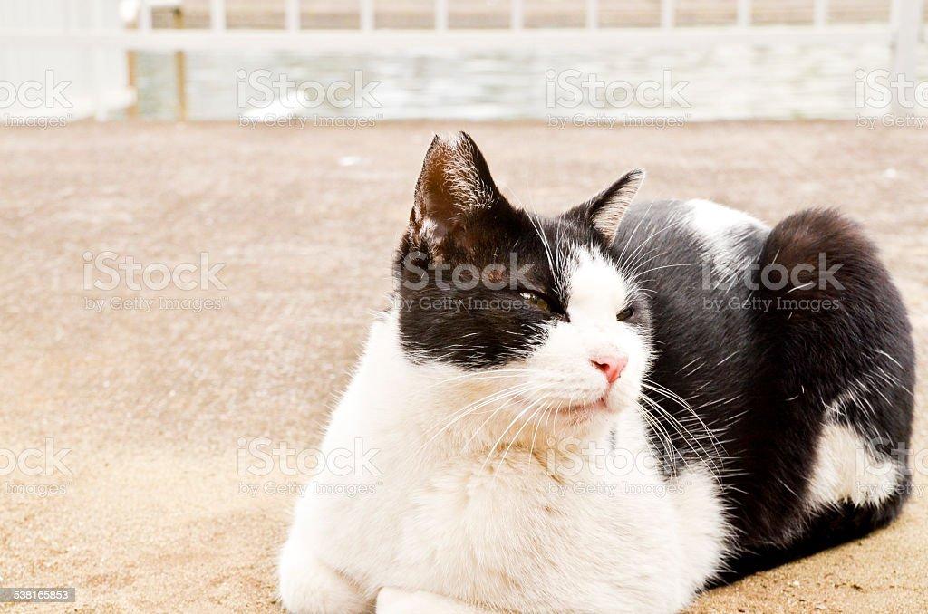 遊離猫&ブラック/ホワイト ストックフォト