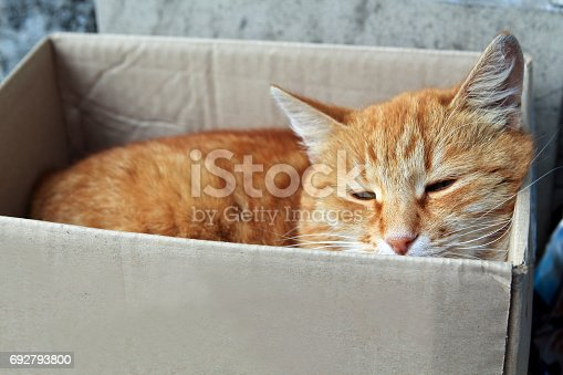 istock stray cat with unhappy face. alley red cat sleeping box 692793800