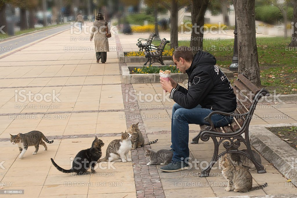 Stray cats begging for food stock photo