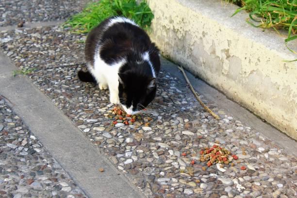 Chats errants mangeant la nourriture sèche de chat à l'extérieur - Photo