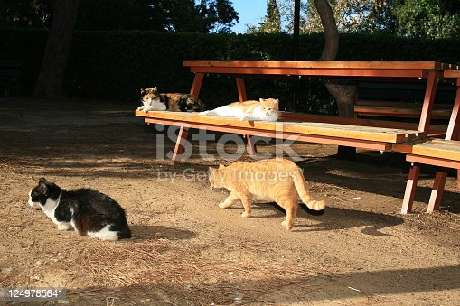 Stray cats on a picnic table of a public park at sunset in Beirut, Lebanon.