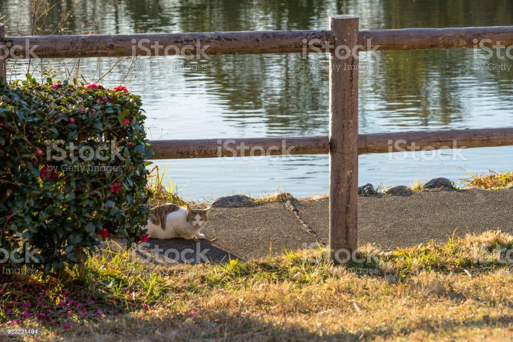 Stray cats in Kadoike Park stock photo
