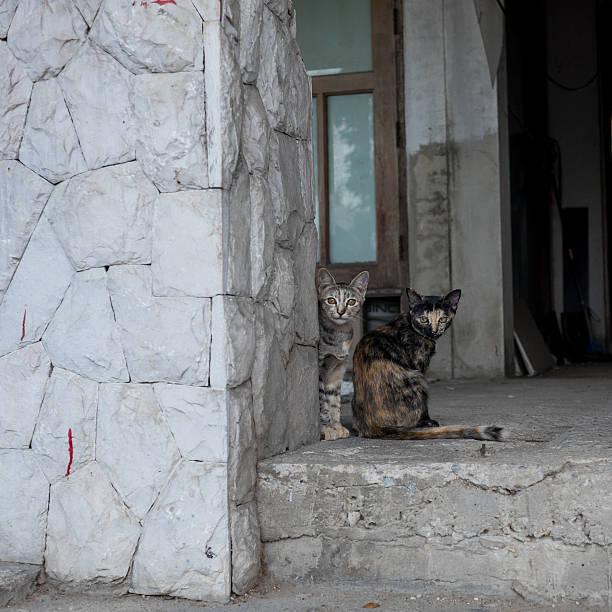 Stray cats in the old house picture id484787210?b=1&k=6&m=484787210&s=612x612&w=0&h=wsjoatdaybo5xzgctiawlpxx8q29ggwb8p1xzmkiv5a=