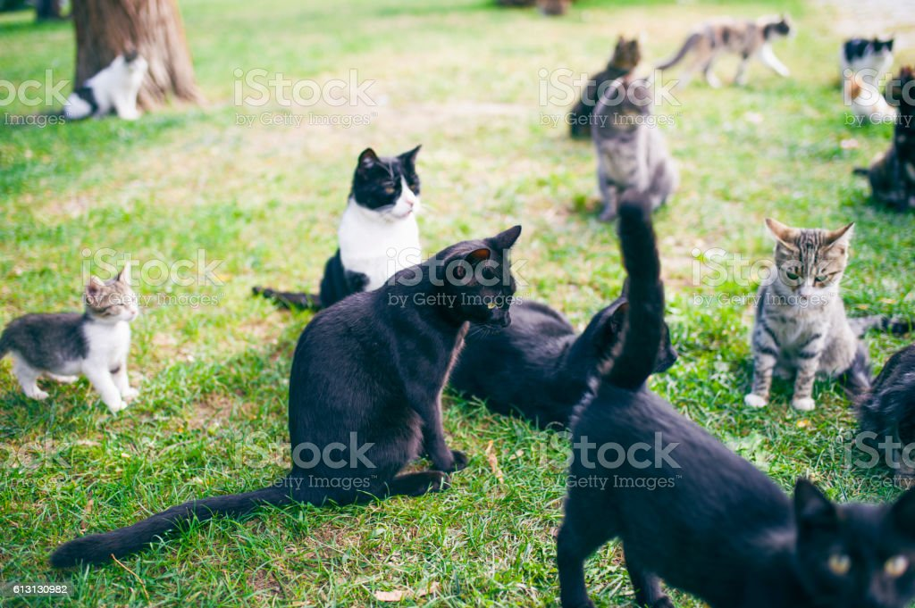 Stray Cats in the Park. Izmir, Turkey stock photo