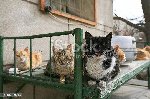 Stray cats on an old bed frame in an abandoned house in Baalbeck, Lebanon.