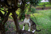 stray cats on tree branch