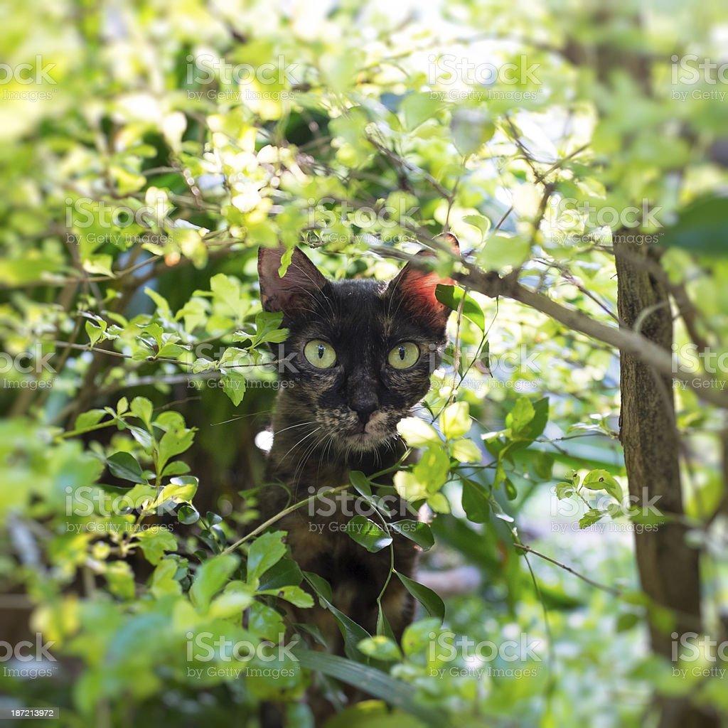 Stray Cats royalty-free stock photo
