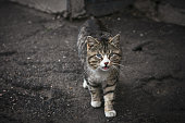 Stray dirty cat with a sick eyes on backyard in abandoned place