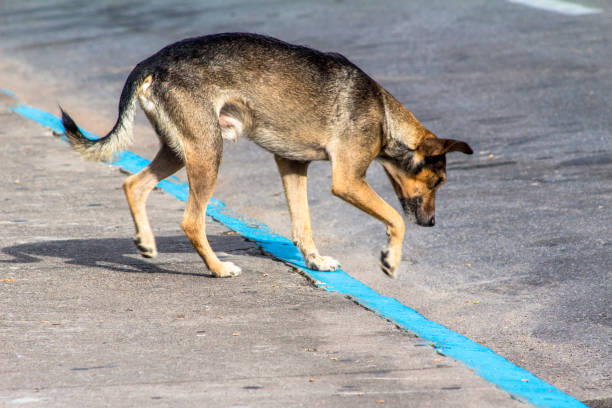 stray dog abandoned on a street in Brazil stock photo