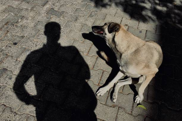 Stray dog and shadows in the street stock photo