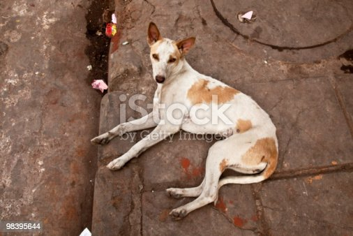 Stray Dog In Delhi India Lying Curbside Stock Photo & More Pictures of Abandoned