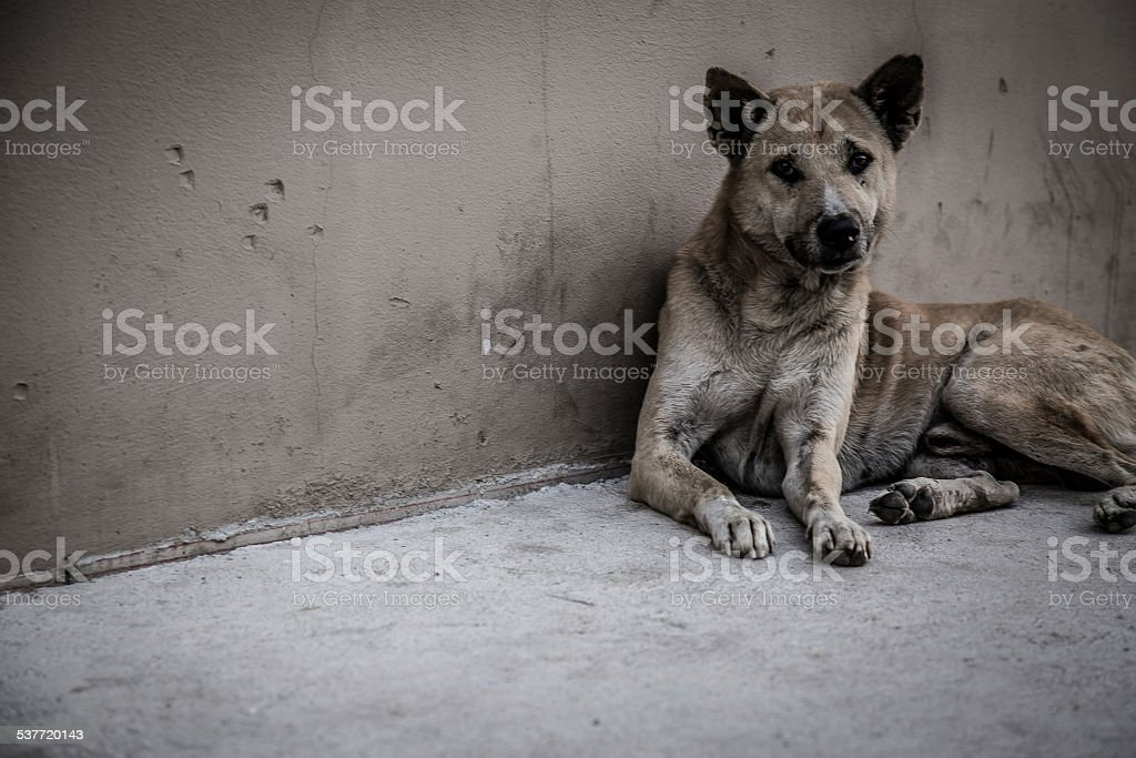 Stray Dog in Thailand stok fotoğrafı