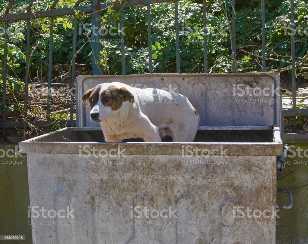 Stray dog is in dustbin. stock photo