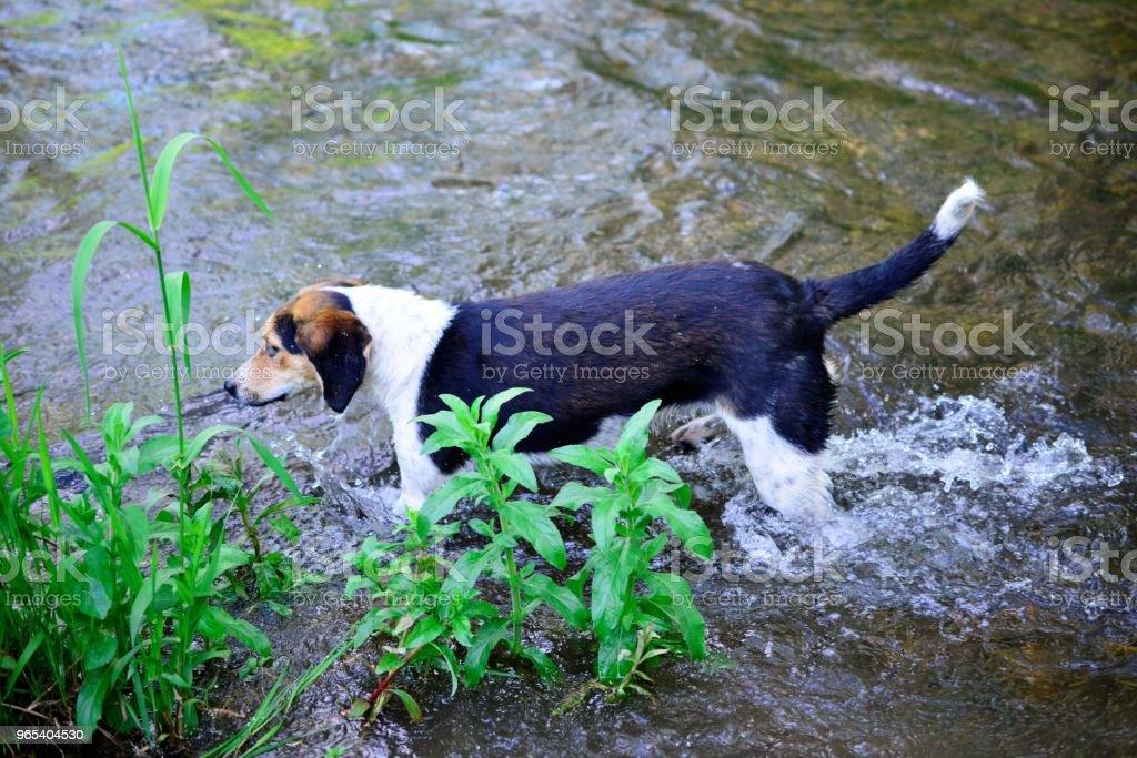 길 잃은 강아지는 개울 물에 상쾌 - 로열티 프리 갈색 스톡 사진