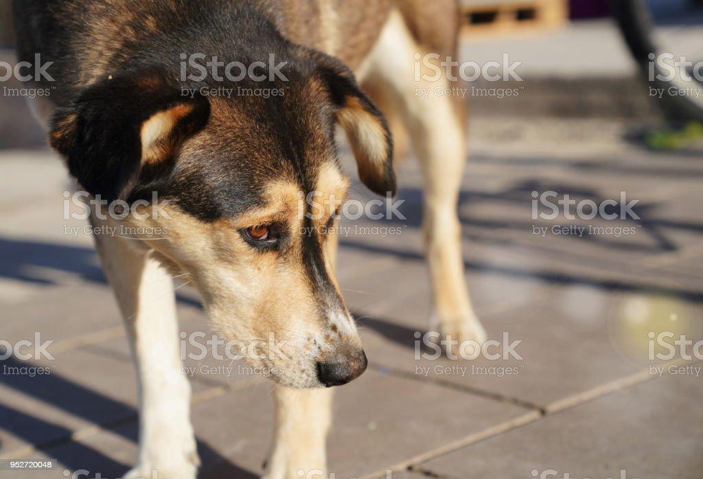 Stray dog looks around desperately under the sun stock photo