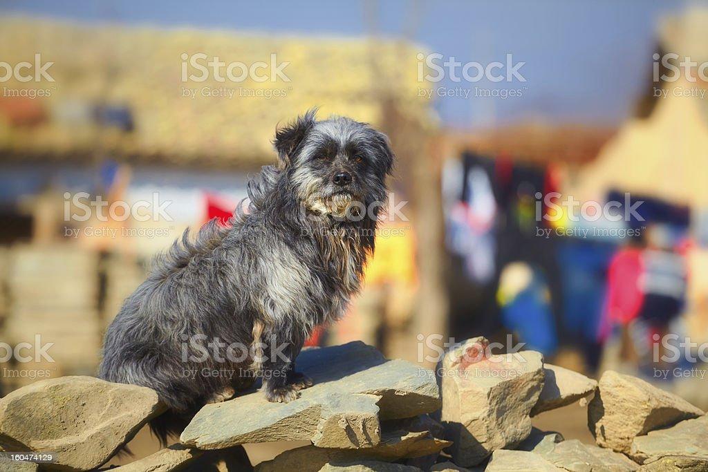 Stray dog on stone fence royalty-free stock photo