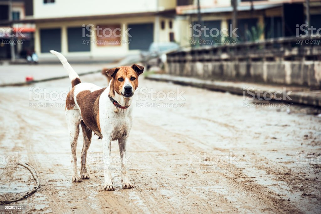 stray dog on the road royalty-free stock photo