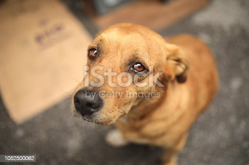 Homeless and hungry dog